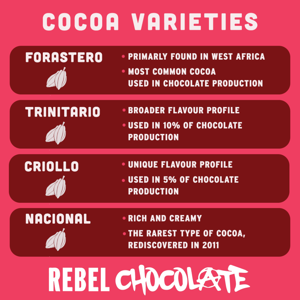 Infographic explaining the 4 main types of cocoa varieties