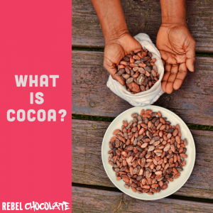 What is cocoa? Cocoa beans being transferred from bag into bowl by hand